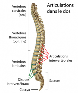 articulations-dos-arthrose